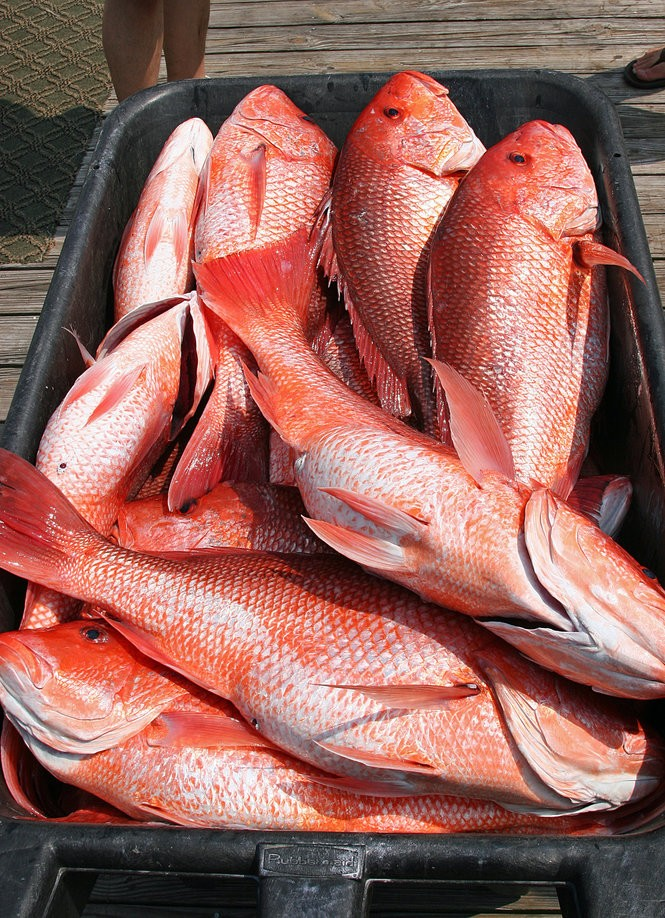 2019 Red Snapper Season for Gulf Shores Announced